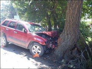 car_tree_470
